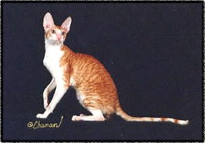 GRAND CHAMPION, National Winner, Morinoo Bo-Tara of Richson (aka Bobo)